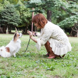 Rewarding dog for good behavior