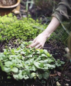 Adding herbs to your garden