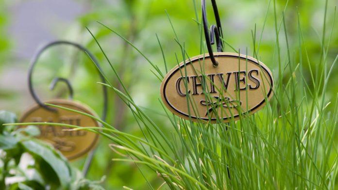 Beautiful Backyard Herb Garden with Labels